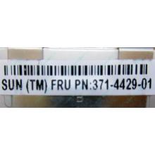 Серверная память SUN (FRU PN 371-4429-01) 4096Mb (4Gb) DDR3 ECC в Кирове, память для сервера SUN FRU P/N 371-4429-01 (Киров)